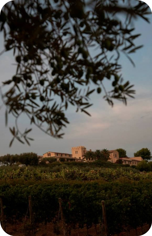 Vineyards and wine business of the Masseria Altemura in Apulia - Cantina24.